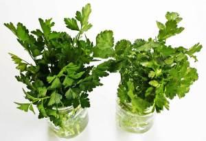 storing-parsley-horiz-a-1200